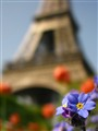 IMG_2003 greetings from Paris