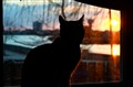 a silhouette of my cat in the sunset