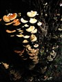 Mushroom_ladder