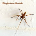 The Spider in the bath