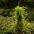 Moss Eruption