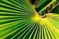 Rays of leaf