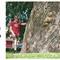 hemsida-pil-silverpil-604cm-linkoping-evighetstrad