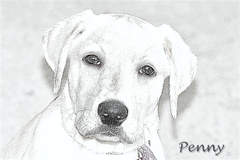 PennySketch