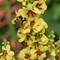 Bee Among the Flowers