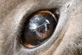 In bulls eye