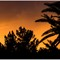 Sunsets_PB170001-Edit