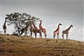 Hluhluwe game park, South Africa