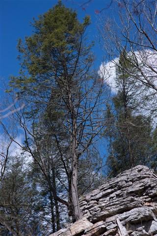 AT Hike 020-2