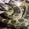 Burkett Lake and Vantage Reptiles-20160916-0008