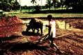 carabao-and-farmer