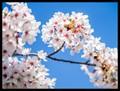 BlossomDPR