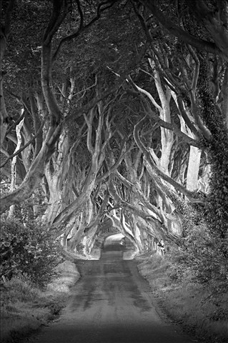 darkhedges_bw