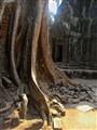 Angkor Wat Trunk