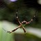 spider-closeup2