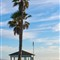 Palm by Gazebo south of Pismo Beach at Coast Village Campgrounds