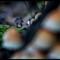 _RAK0551-28: OLYMPUS DIGITAL CAMERA