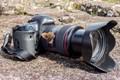 Scotch Argus on My Canon