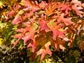 Rusty leafs
