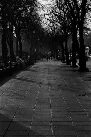 Botanic walkabout 22-01-2010-15