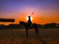 Polo horse in sunset