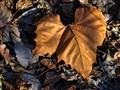 Leaf on Leaves