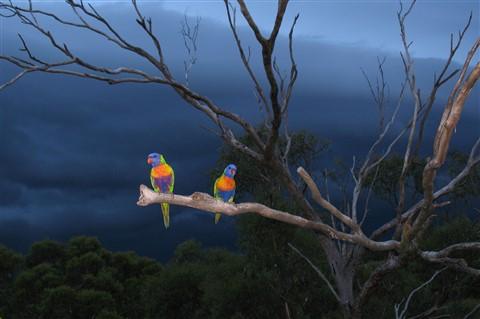 Storm Angels