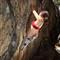 climbing 02