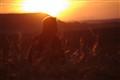 Hervé sunset