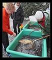 Sale Christmas fish _9842_DxO