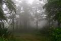 Deilaman forest