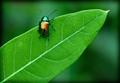 Technicolor Beetle