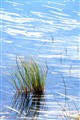 Pond Grass