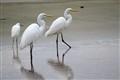 Long legs Family
