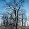 20160101 Backlit Tree V2__