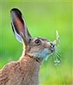 hare 06292011 194854