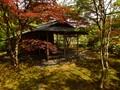 Japanese Gardens-03