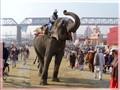 Elephant's salute