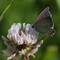 Chasing Butterflies and insects-1025312