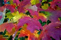 Autumn Leaves #8