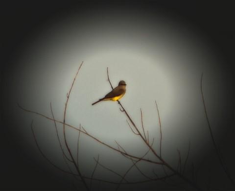 tweet tweet (1)