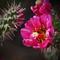 Cactus Flower 01-01