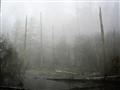 Foggy 1541