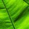 Roads in a Leaf