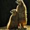 P1-Jim Lenthall-Meercats