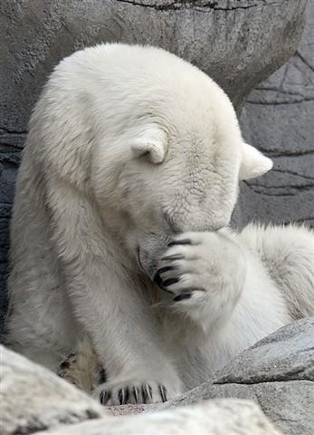 Shy-Bear
