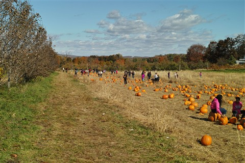 Sandi in the pumpkin patch at Wilkens farm