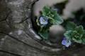 032221_S_Flowers