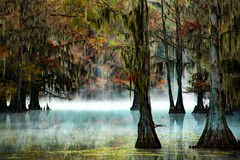 Morning Mist at Caddo Lake