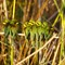 Okavango Beeeaters - 1